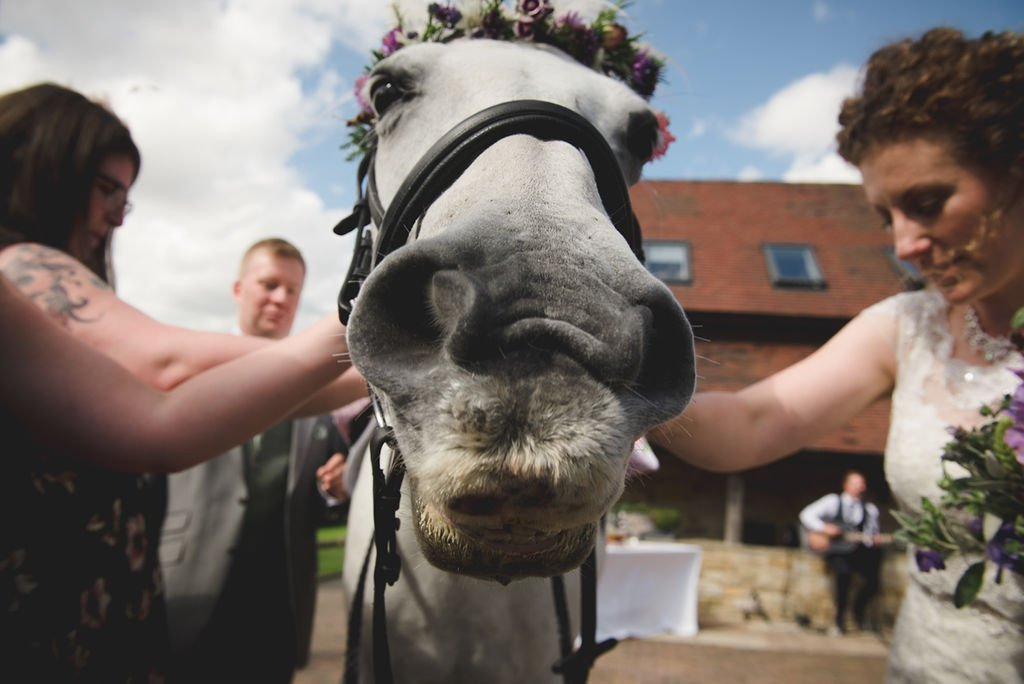 horse at outdoor wedding, deer park hall, cotswolds